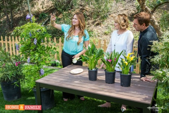 garden-expert-shirley-bovshow-examines-wisteria-seed-pod-with-mark-steines-cristina-ferrare-in-garden-with-poisonous-plants-home-and-family-show-hallmark-channel