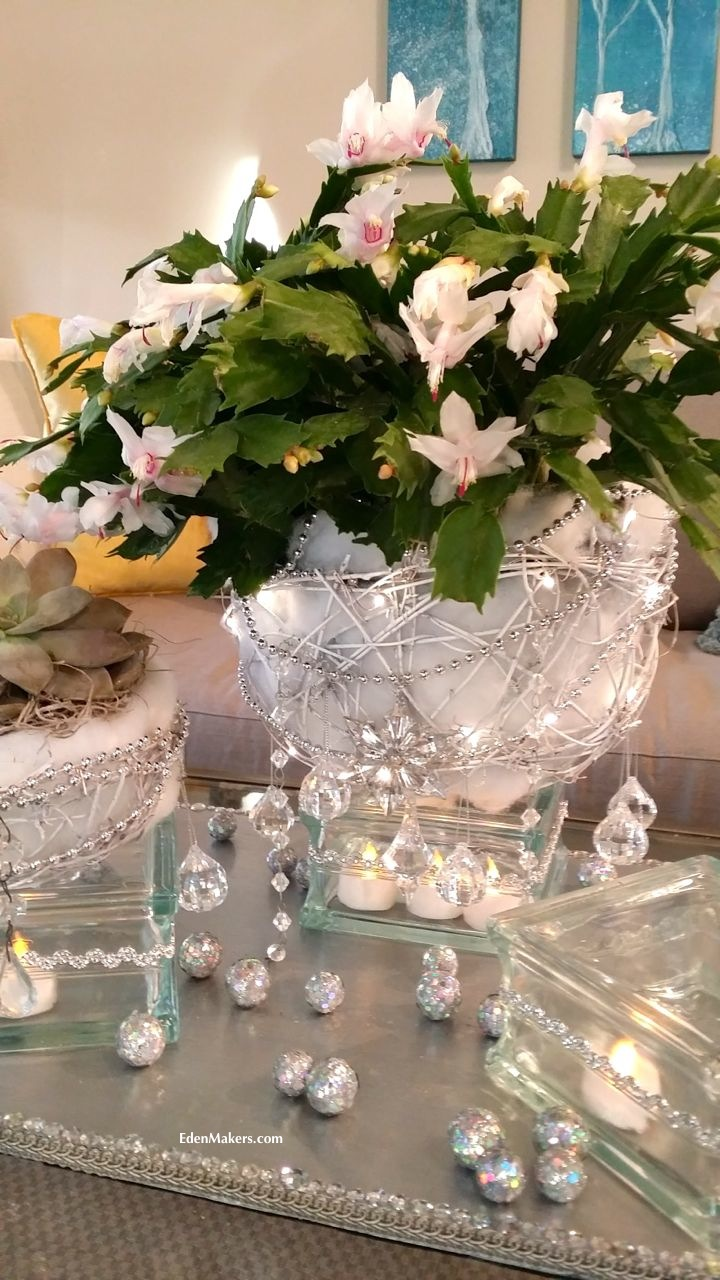 christmas-cactus-in-bloom-white-flowers-snowball-planter-christmas-centerpiece-designed-shirley-bovshow-home-and-family-show-holiday-special-hallmark-edenmakers-blog