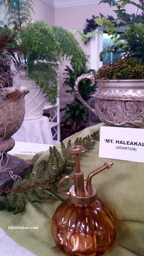 copper-plant-mister-ferns-mt-haleakala-adiantium-shirley-bovshow-edenmakersblog