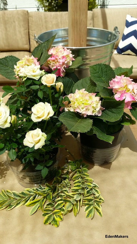 pink-hydrangeas-white-creme-miniature-roses-variegated-hebe-greens-live-plant-wedding-decor-edenmakers-blog