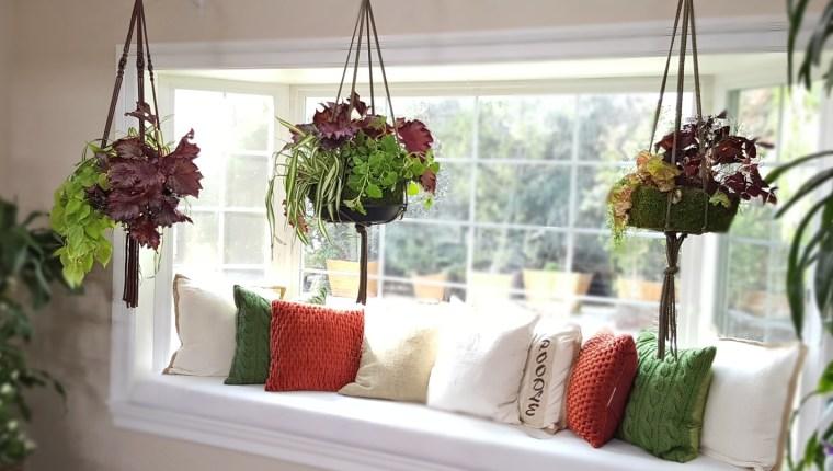 shirley-bovshow-instant-hanging-indoor-planters-edenmakerblog