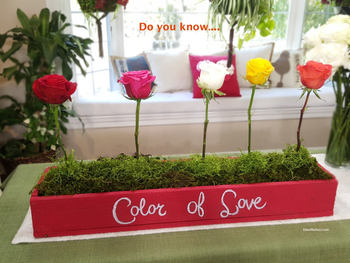THE MEANING OF ROSE COLORS IN RELATIONSHIPS   Eden Makers Blog by ...