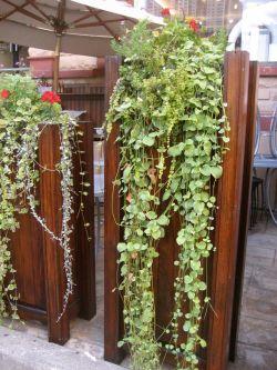 Small Of Vertical Wall Garden Plants