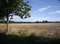 Stunning views on our open field