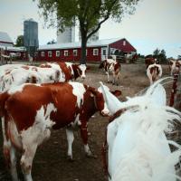 Hornstra Farms: An Update