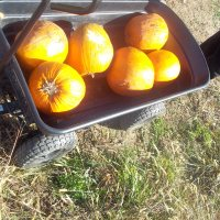 10 Steps to Cooking Fresh Pumpkin for Pie.