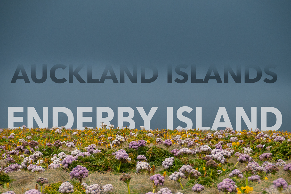 EnderByIslandsplash_eaw_1711-Edit6x4Web.