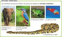 Animalesvertebrados