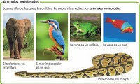 imagenes animales vertebrados