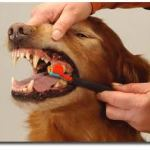 como cepillarle los dientes a un perro