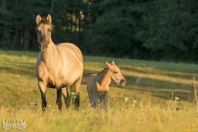 Koniki polskie -Dumna mama