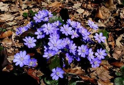 Frühling im Wienerwald