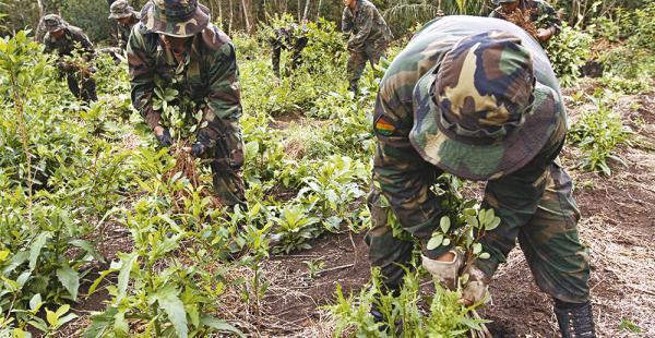 En Bolivia existen 20.200 hectáreas de coca plantadas, según el último informe de Naciones Unidas