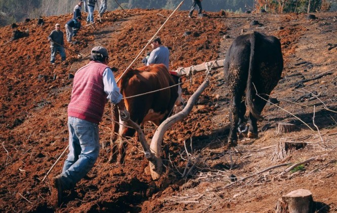 Más de 500 mil unidades de producción agropecuaria practican agricultura familiar