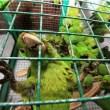 Animales silvestres fueron incautados el fin de semana