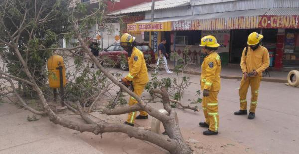 El árbol cayó sobre la acera del hospital Francés y afortunadamente no había nadie allí