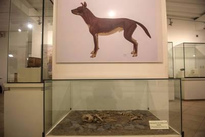 Restos de perros y roedores en un cementerio prehispánico en Perú. / AFP