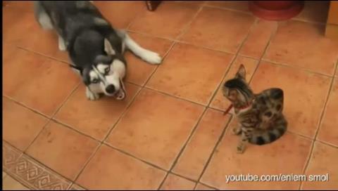 Divertidos casos de perros que intentan llevarse bien con gatos