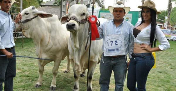 300 bovinos serán rematados en Fexposar, que se realizará este fin de semana en San Rafael