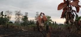 Tata Kelola Hutan Kabupaten Muna Bermasalah