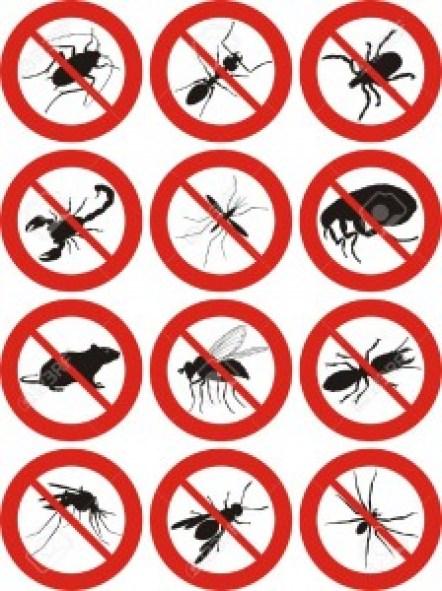 شركة,مكافحة,الحشرات,بالجبيل