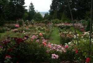 garden, Joy Loverde, Forgetfulness, Alzheimers, elder care