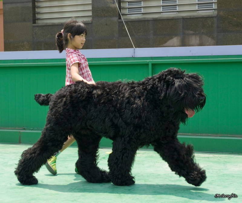 Large Of Russian Dog Breeds