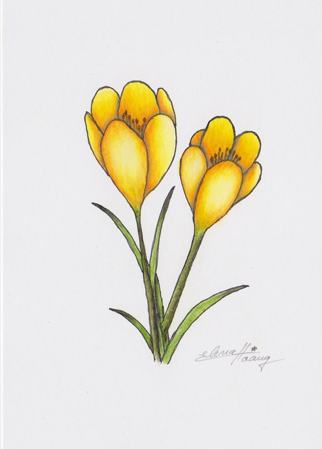008 - Yellow crocus