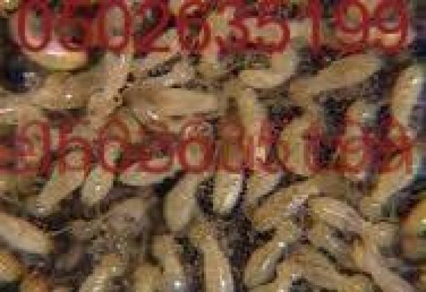 شركة مكافحة النمل الابيض