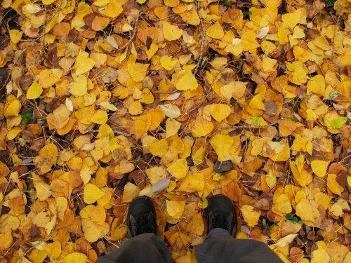 osu-leaves