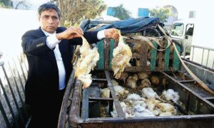 Affaire-des-poulets-morts-a-El-Jadida