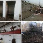 Abattoirs : Le rapport «coupe-faim» de la Cour des comptes