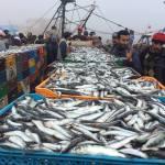 Coin des Poètes…Avec Moussa Ettalibi…Pauvre sardine