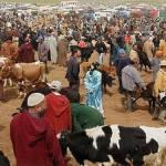 El Jadida : Le gouverneur décide la fermeture de Souk Sebt Saïss à cause de la fièvre aphteuse