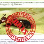 Καταρρίπτεται – Γενετικά Τροποποιημένα μυρμήγκια θα μπορούσαν να αντικαταστήσουν μέλισσες, οι ισχυρισμοί της Monsanto.