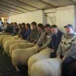 Καταρρίπτεται – Συνελήφθησαν γιατί λειτουργούσαν οίκο ανοχής με… προβατίνες!