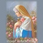 Poesia mes de Mayo mes de la Virgen y de las flores El milagro de la rosa