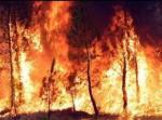 Información, minuto a minuto, sobre los incendios forestales en la web del Ministerio de Agricultura