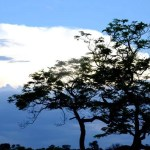 Fotos Parque Kruger Sudáfrica, atardecer