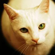 gato castrado2