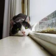 gato en la nueva casa