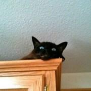 A los gatos no les gustan los ruidos-Feliway