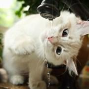 Consejos para pasar un verano agradable con tu gato-Feliway