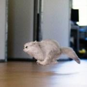 Los gatos y sus locas carreras-Feliway