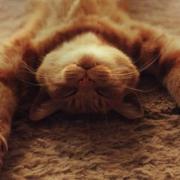 Mi gato esta de vacaciones en una residencia-Feliway