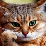 cosas-de-gatos-Feliway