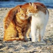 dos gatos en la arena