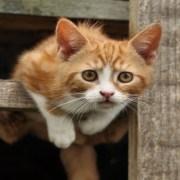 gato escapando