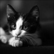 Gatito,acicalándose