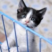 peque gato